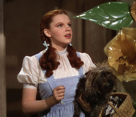 What You Didn't Know About the Real Toto from 'The Wizard